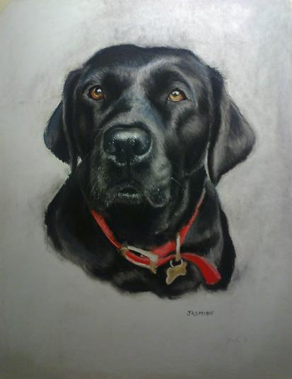 Pet Portraits in Pencil, Charcoal and Pastels - Dog - Jasmine - Heidi Meadows - Portrait Artist - Surrey Art Gallery
