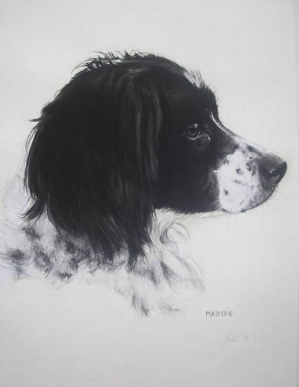 Pet Portraits in Pencil, Charcoal and Pastels - Dog - Maddie - Heidi Meadows - Portrait Artist - Surrey Art Gallery