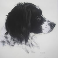 Pet Portraits in Pencil, Charcoal and Pastels – Dog – Maddie – Heidi Meadows – Portrait Artist – Surrey Art Gallery