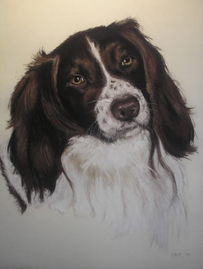 Pet Portraits in Pencil, Charcoal and Pastels - Dog - Ozzy - Heidi Meadows - Portrait Artist - Surrey Art Gallery
