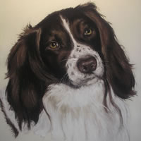 Pet Portraits in Pencil, Charcoal and Pastels – Dog – Ozzy – Heidi Meadows – Portrait Artist – Surrey Art Gallery