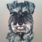 Pet Portraits in Pencil, Charcoal and Pastels – Dog – Schnauzer – Heidi Meadows – Portrait Artist – Surrey Art Gallery