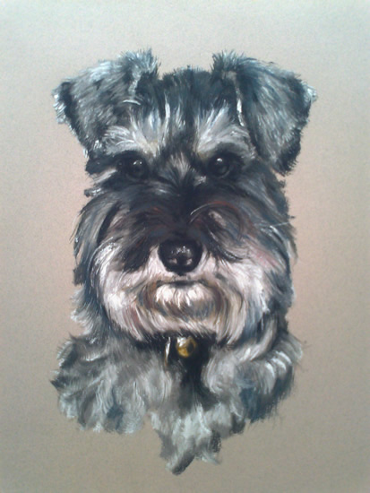 Pet Portraits in Pencil, Charcoal and Pastels - Dog - Schnauzer - Heidi Meadows - Portrait Artist - Surrey Art Gallery