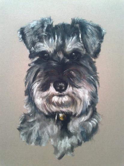 Pet Portraits in Pencil, Charcoal and Pastels - Dog - Schnauzer - Heidi Meadows - Portrait Artist - Surrey Art Gallery