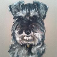 Pet Portraits in Pencil, Charcoal and Pastels – Dog – Schnauzer – Heidi Meadows – Portrait Artist – Surrey Art Gallery