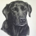 Pet Portraits in Pencil, Charcoal and Pastels – Dog – Sniffer – Labrador – Heidi Meadows – Portrait Artist – Surrey Art Gallery