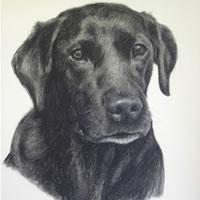 Pet Portraits in Pencil, Charcoal and Pastels – Dog – Sniffer – Labrador – Heidi Meadows – Portrait Artist – Surrey Art Gallery