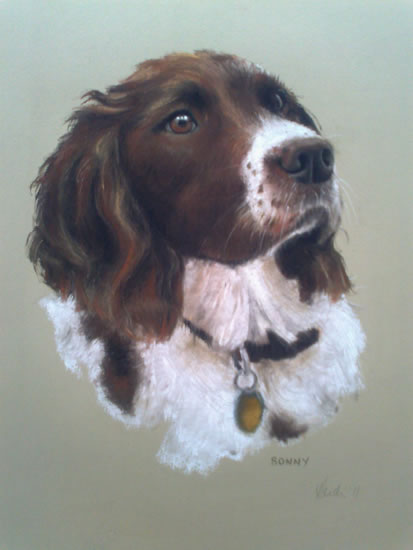 Pet Portraits in Pencil, Charcoal and Pastels - Dog - Sonny - Heidi Meadows - Portrait Artist - Surrey Art Gallery