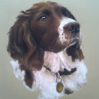Pet Portraits in Pencil, Charcoal and Pastels – Dog – Sonny – Heidi Meadows – Portrait Artist – Surrey Art Gallery