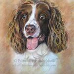 Portrait Of Dog – Sadie – Jennifer Morris – Pet Portraiture Artist – Sussex Art Gallery