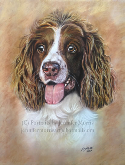 Portrait Of Dog - Sadie - Jennifer Morris - Pet Portraiture Artist - Sussex Art Gallery