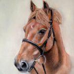 Portrait Of Horse- Red – Jennifer Morris – Equestrian and Pet Portraiture Artist – Sussex Art Gallery