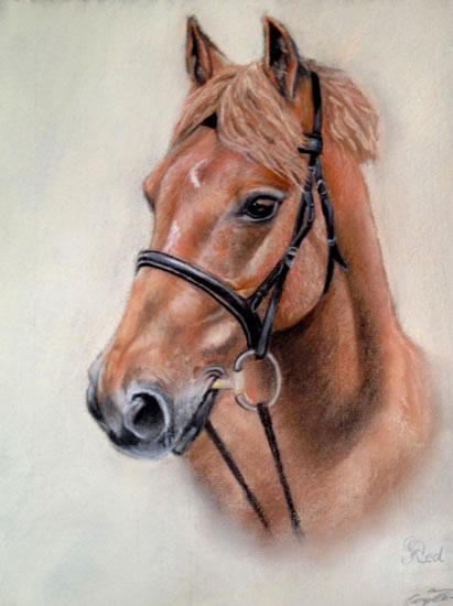 Portrait Of Horse- Red - Jennifer Morris - Equestrian and Pet Portraiture Artist - Sussex Art Gallery