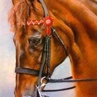 Portrait Of Horse – Woodlander Firefly – Jennifer Morris – Equestrian and Pet Portraiture Artist – Sussex Art Gallery