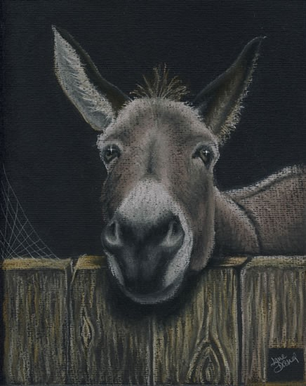 Portrait of Donkey - Where's My Carrot - People, Pet and Horse Portraits and Fantasy Art - Jane Disney - Frimley and Camberley Society of Arts - Surrey Art Galle