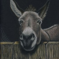 Portrait of Donkey – Where's My Carrot? – People, Pet and Horse Portraits and Fantasy Art – Jane Disney – Frimley and Camberley Society of Arts – Surrey Art Gallery