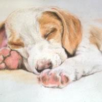 Portrait of Sleeping Puppy – Snooze – Jennifer Morris – Pet Portraiture Artist – Sussex Art Gallery