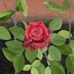Flower – The Rose – Sicilian Artist Teresa Scannella – Surrey Artists Gallery – White Rose Art Group Woking