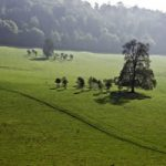 Tree Family, Gatton Park, Reigate, Surrey – Stephen Webb – Pyrford Fine Art Photographer – Surrey Artists Gallery
