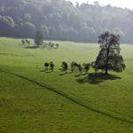 Tree Family, Gatton Park, Reigate, Surrey – Stephen Webb – Pyrford Fine Art Photographer – Surrey Artists Gallery