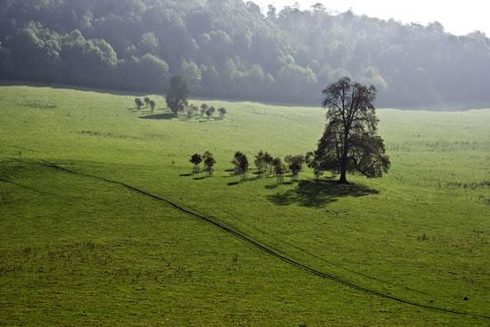 Tree Family, Gatton Park, Reigate, Surrey - Stephen Webb - Pyrford Fine Art Photographer - Surrey Artists Gallery