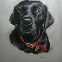 Pet Portraits in Pencil, Charcoal and Pastels – Dog – Jasmine – Heidi Meadows – Portrait Artist – Surrey Art Gallery