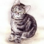 Plant & Animal Drawings – Cat Portrait – Jenny Heath – Watercolour Paintings and Drawings of Animals – Richmond Art Society