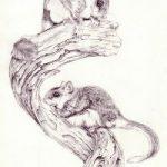 Animal Drawings – Gerbils – Jenny Heath – Watercolour Paintings and Drawings of Animals – Richmond Art Society
