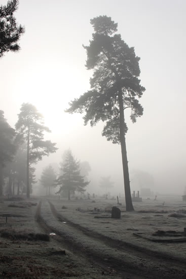 Digital Art - Brookwood Cemetery - Early-Morning Fog - Cate Field - Digital Artist, Art Teacher and Tutor - Surrey Artists Gallery