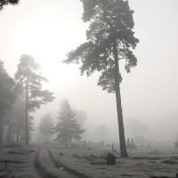 Digital Art – Brookwood Cemetery – Early-Morning Fog – Cate Field – Digital Artist, Art Teacher and Tutor – Surrey Artists Gallery