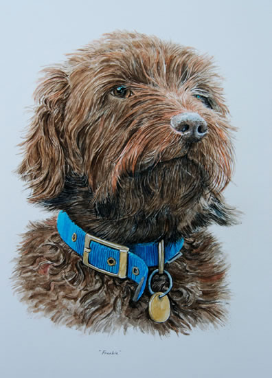 Dog Portrait - Frankie - David Fisher - Detailed Caricatures, Portrait & Landscape Artist - Surrey Artist