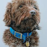 Dog Portrait – Frankie – David Fisher – Detailed Caricatures, Portrait & Landscape Artist – Surrey Artist