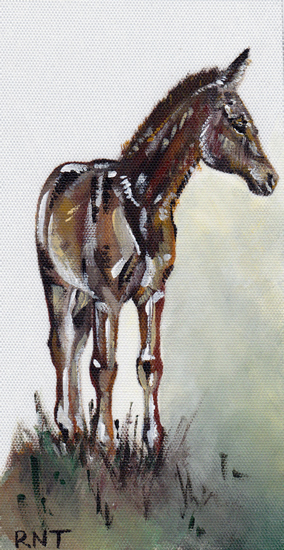 Foal - Rachael Tan - Surrey Artist - Painting in Acrylics on Canvas and Drawings in Charcoal and Pencil