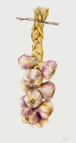 Garlic - Fiona Wheeler - Surrey Gallery - Botanical Artist - Society of Floral Painters, Society of Botanical Artists, Guildford Art Society