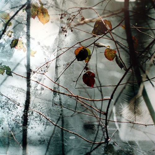 Leaves with Ice - Surrey Artist Christiane Zschommler - Fine Art Photography