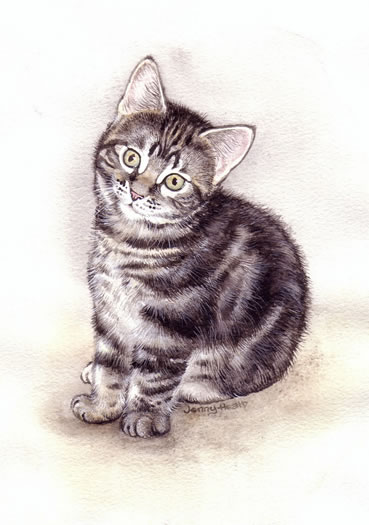 Plant & Animal Drawings - Cat Portrait - Jenny Heath - Watercolour Paintings and Drawings of Animals - Richmond Art Society