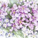 Plant – Leucocoryne – Jenny Heath – Watercolour Paintings and Drawings of Plants and Animals – Surrey Artists Gallery