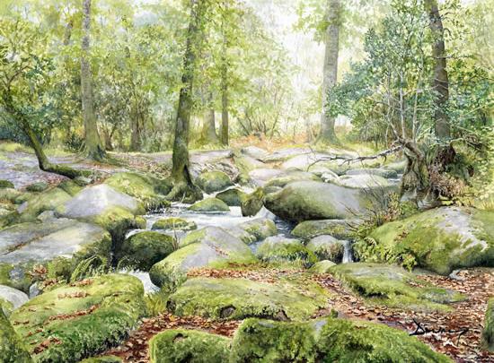 Becky Falls - Dartmoor Devon - Rocky Stream