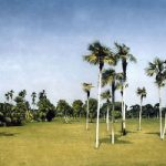 Botanical Garden – Cuba – Surrey Artists Gallery Fine Art Prints – Noël Haring