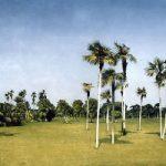 Botanical Garden – Cuba – Surrey Artists Gallery Fine Art Prints – Noël Haring