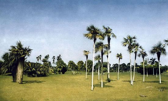 Botanical Garden - Cuba - Surrey Artists Gallery Fine Art Prints - Noël Haring