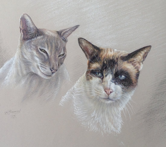Cat Portrait Paintings - Surrey Artist Ian Henderson
