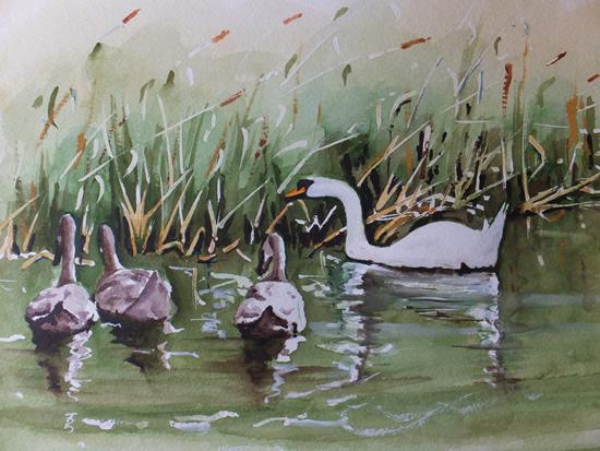 Basingstoke Canal Surrey Art - Swans