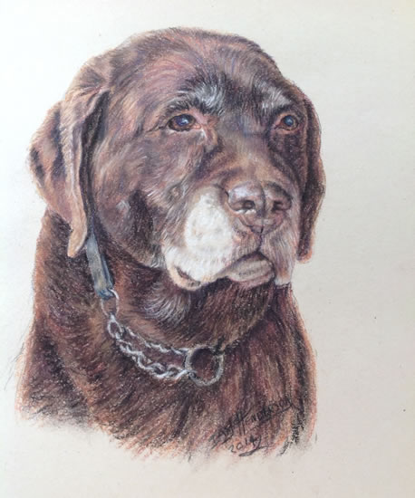 Dog Portrait Painting in Soft Pastel