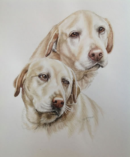 Labradors Dog Portrait