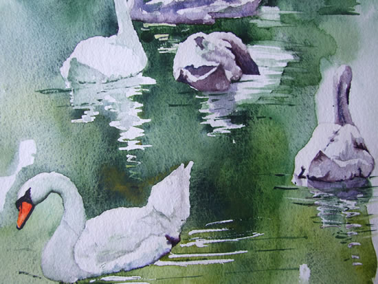 Swans - Basingstoke Canal - Watercolour Art in Surrey Gallery