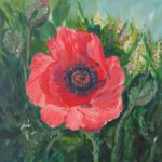 Large Poppy – Floral Art – Morning Beauty – Woking Art Society Artist Yana Linch