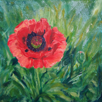 Red Pink Poppy Unfurled - Floral Art by Woking Surrey Artist Yana Linch - Floral Gallery