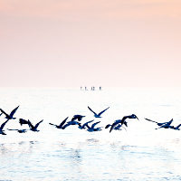 Sea Birds – Paddle Boarders Brighton – Sue Roche Photographic Artist – Surrey Artists Gallery