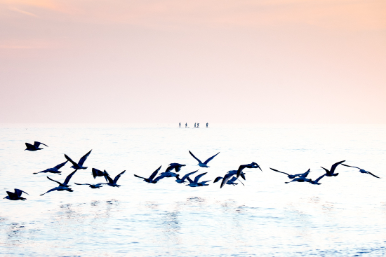 Sea Birds - Paddle Boarders Brighton - Sue Roche Photography